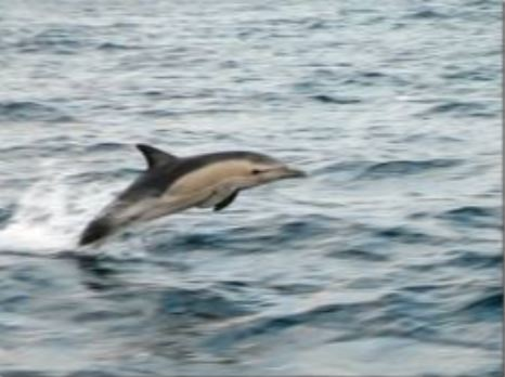 INSTA dolphin leaping